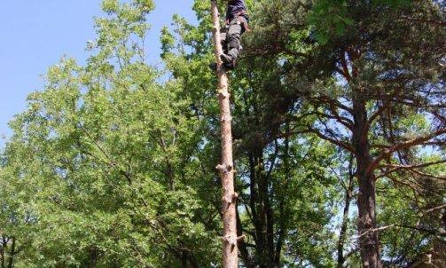 Abattage démontage d'arbre Barcelonnette